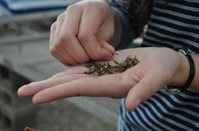 Julia sorting seeds