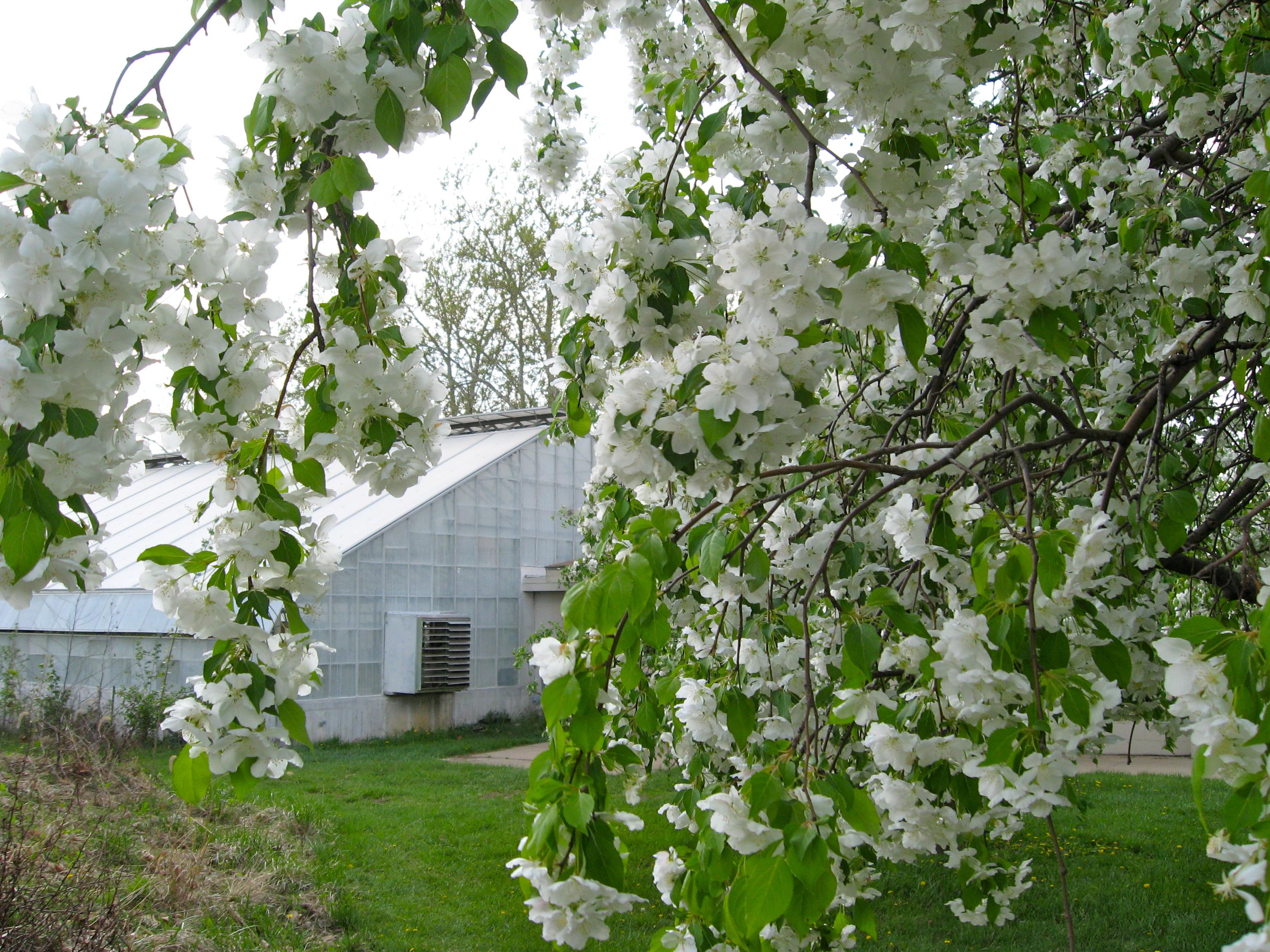 KU greenhouse
